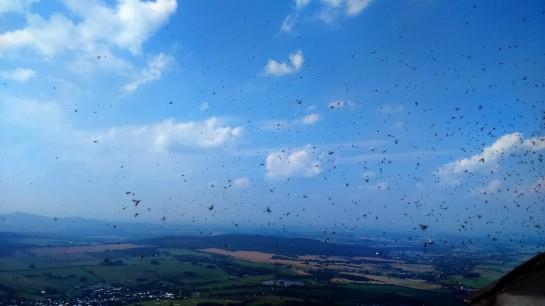 Na wieży widokowej atakowały tysiące muszek